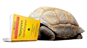 Черепахи трейдеры